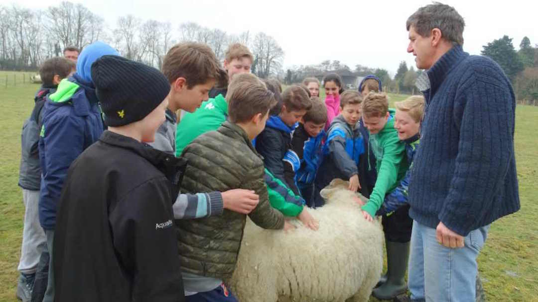 Our sheep do love a fuss from our children and families
