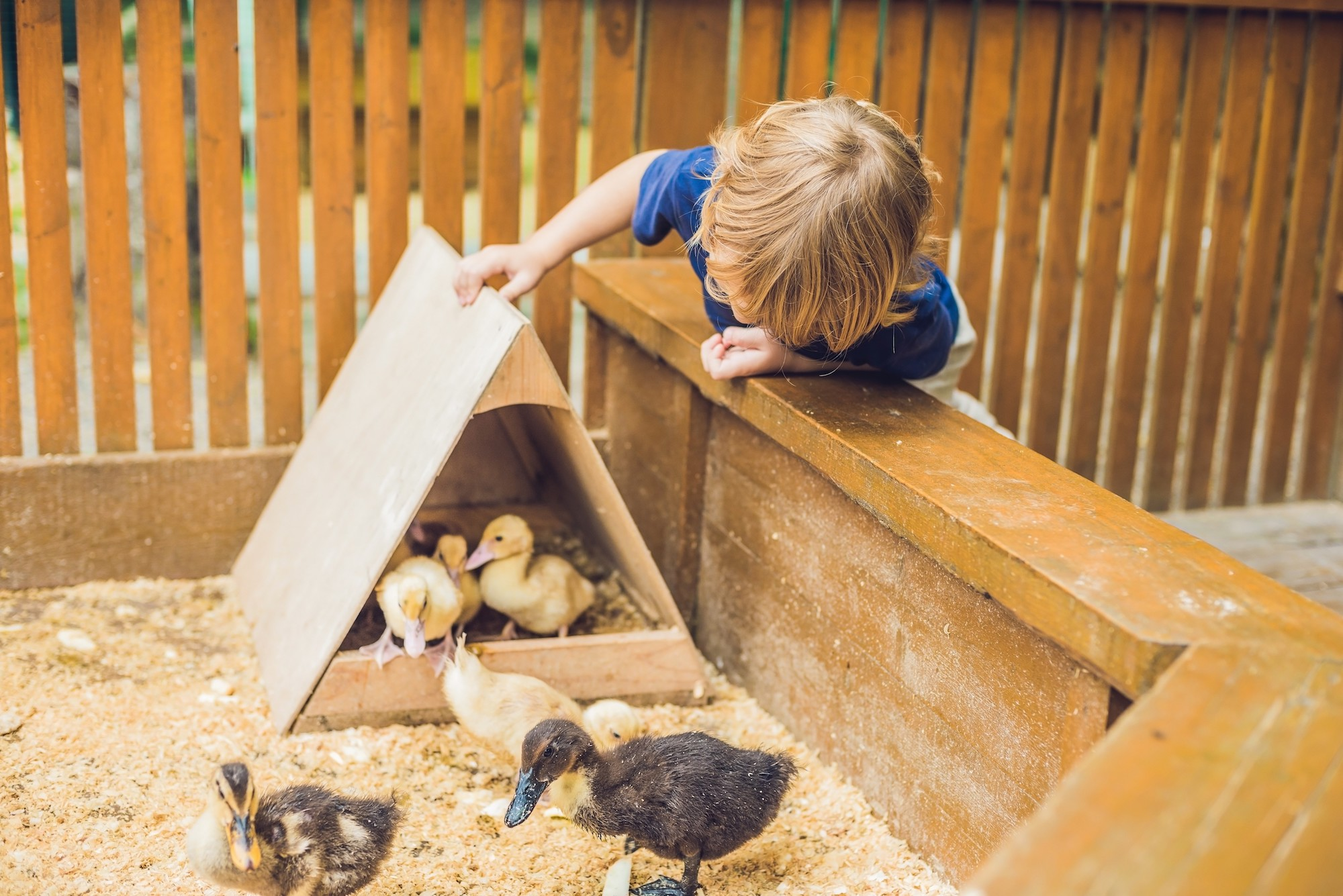 Vulnerable children heal trauma by working with animals, at one of the top Kent charities for children's mental health.