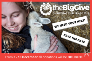 The Big Give Christmas Challenge is Here!