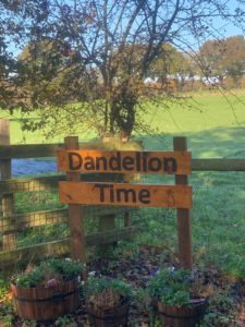 New Dandelion Time Branch Opens!